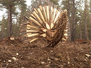 Wooden Capercaillie
