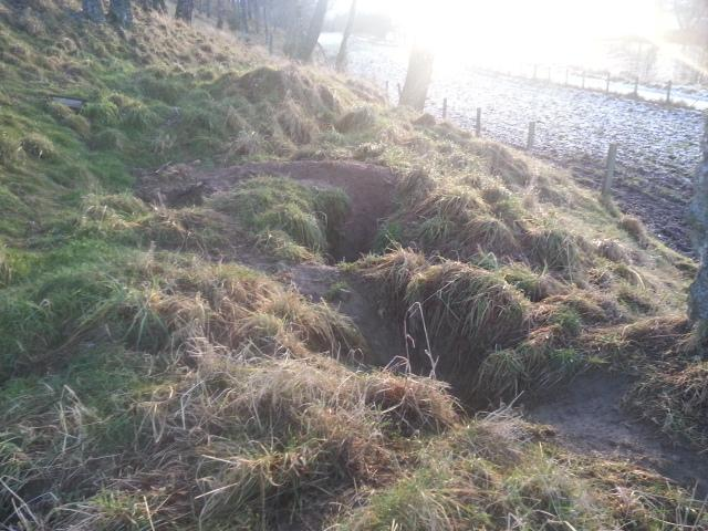 Badger sett in evening sun