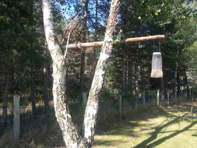 Cantilever bird feeder