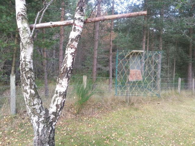 New bird feeder cage