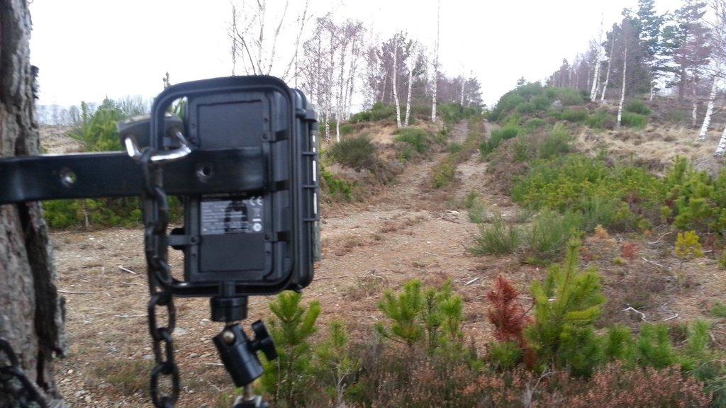 Maginon trail cam at Auchgourish
