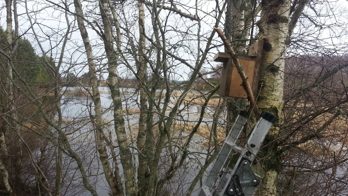 New nest box at Milton Loch Bird Hide