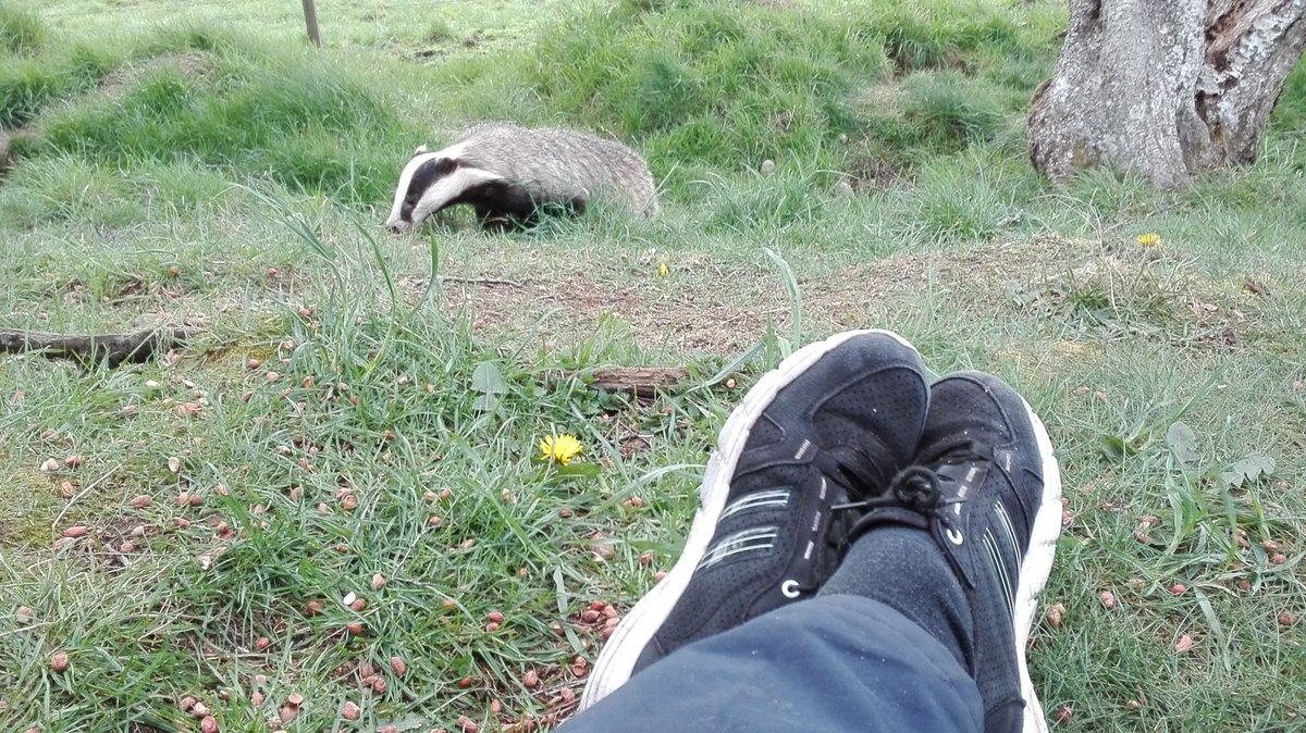 My trainers and a badger